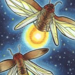 Insectae 14